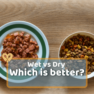 Wet vs Dry Cat Food: Which is Better?