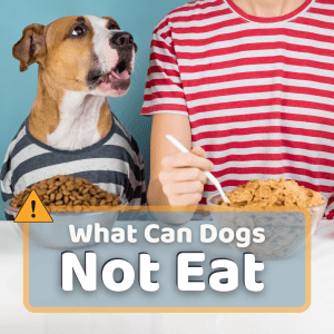 What Can Dogs Not Eat: 35 Foods Toxic To Dogs
