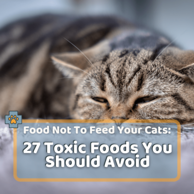 Food Not To Feed Cats: 27 Toxic Foods You Should Avoid