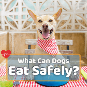 What Foods Can Dogs Eat? 62 Human Foods Dogs Can Eat Safely