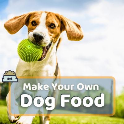 Make Your Own Dog Food: 7 Vet Approved Meals Your Dog Will Love