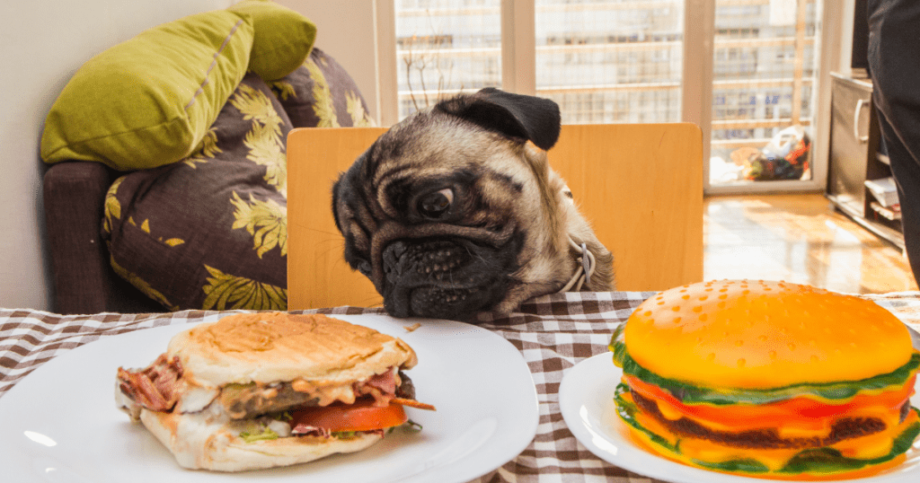 What Can Dogs Not Eat: 35 Toxic Foods Poisonous To Dogs