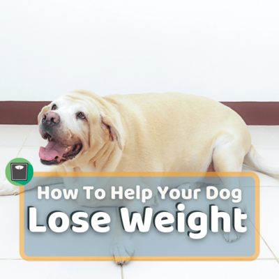 How Can I Help My Dog Lose Weight? 7 Easy Dog Weight Loss Tips