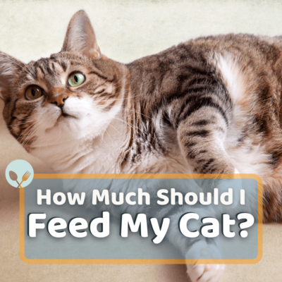How Much Should I Feed my Cat?